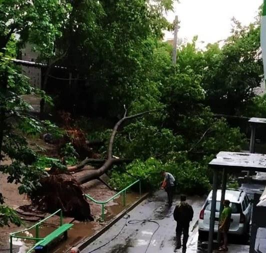 Лысенко рассказал о последствиях бури в Днепре: 57 упавших деревьев и обесточенные больницы