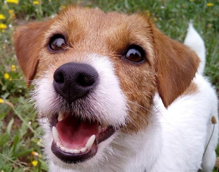 В Никополе догхантеры придумали новый способ травли собак