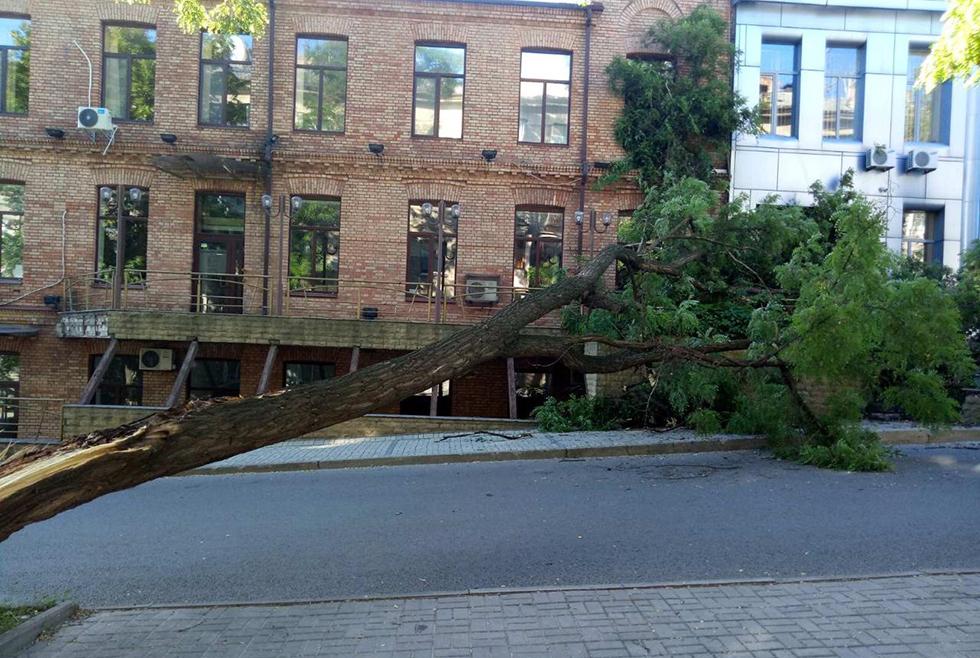 В Днепре на проезжую часть упало высокое дерево (ФОТО, ВИДЕО)