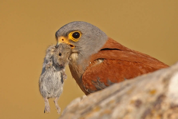 В Днепре в офисной вентиляции поселились птенцы хищной птицы (ФОТО)