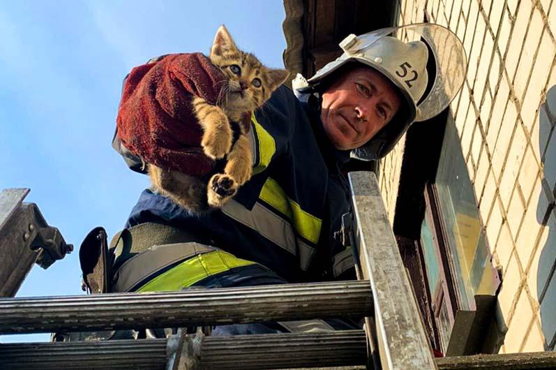 Застряли на крыше: в Вольногорске спасли 4 котят (ФОТО)