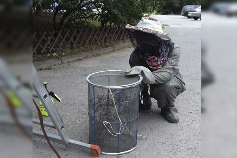 В Днепре спасатели убирали с дерева пчелиный рой