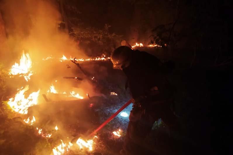 Лесной пожар Шульговка