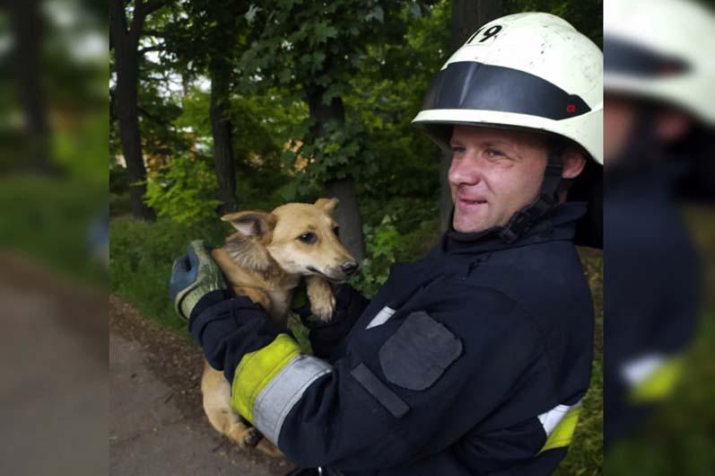 В Днепре спасатели доставали собаку из ловушки