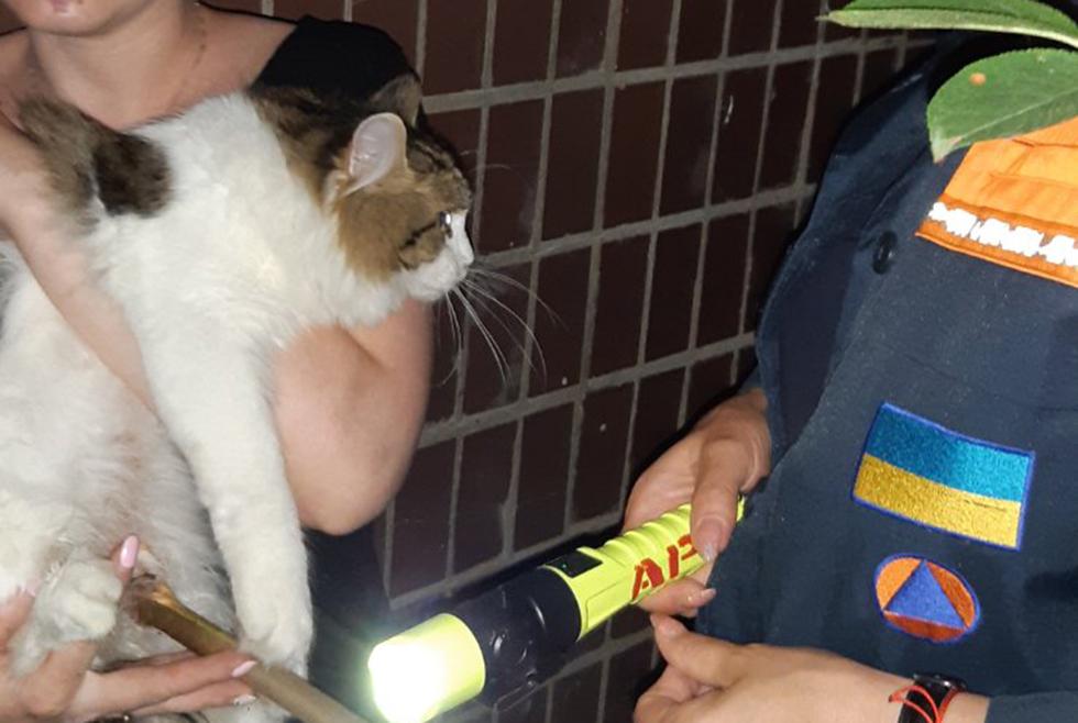 Среди ночи ловили кота: в Днепре спасатели достали пушистика из ловушки