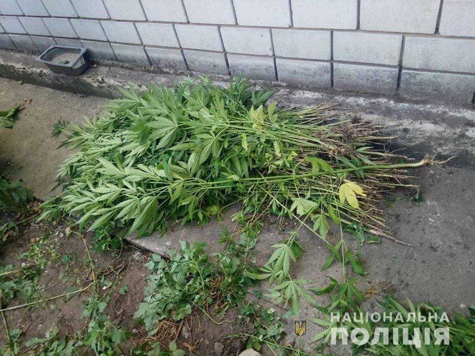 Сезон конопли в самом разгаре: на Днепропетровщине задержали мужчин за выращивание наркотиков (ФОТО)