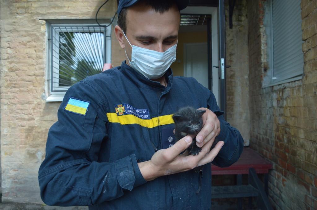 Освободили кроху: в Днепре спасли котёнка из заточения (ФОТО, ВИДЕО)
