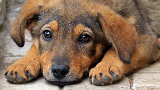 Увага, сказ: чим загрожуть безпритульні тварини у Дніпрі