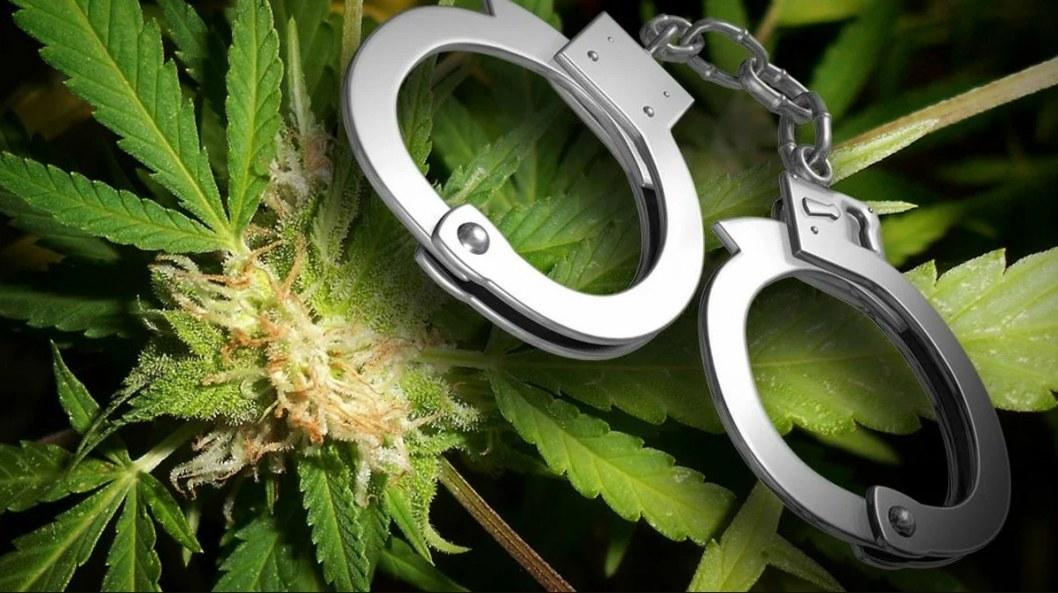 Более 600 кустов конопли: на Днепропетровщине задержали наркоторговца (ФОТО)