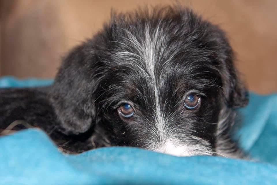 Волонтер из Днепра провела два месяца в офисе с 7-ю щенками