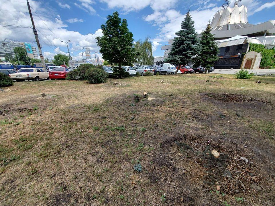 В Днепре вырубили ели возле цирка