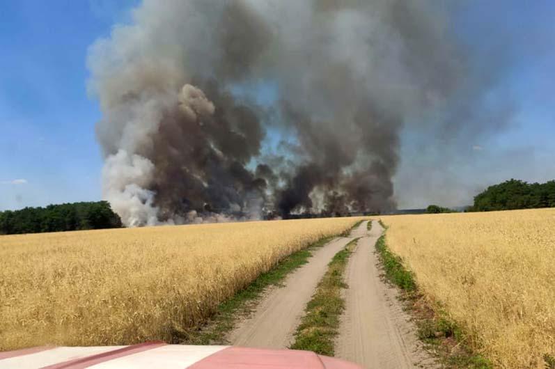 Дым стеной: возле Царичанки спасатели тушили пшеничное поле