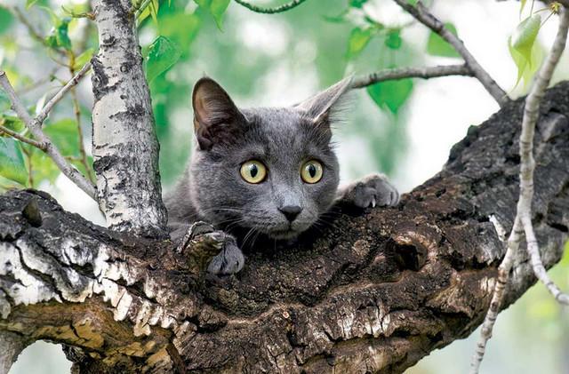 На Днепропетровщине спасли котика, застрявшего на высоком дереве (ФОТО)