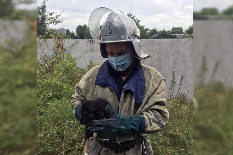 Все то же село: в Криничках спасатели опять доставали щенка из ловушки