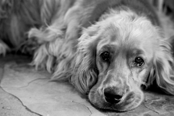 Днепровского живодера, который повесил щенка, осудили на 5 лет