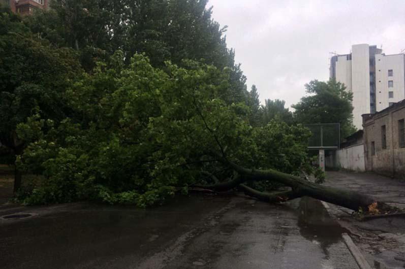 В Днепре на проезжую часть рухнуло дерево (ФОТО)