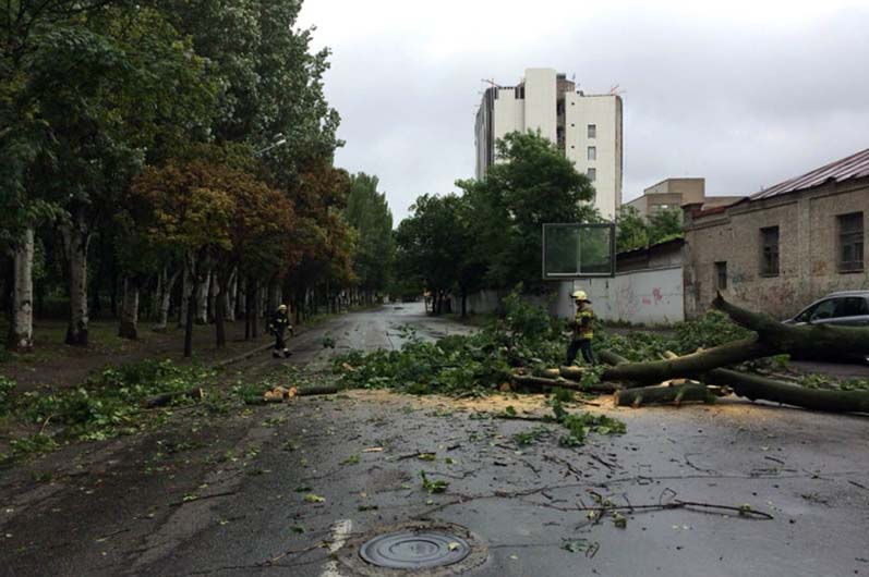 В Днепре на дорогу упало дерево