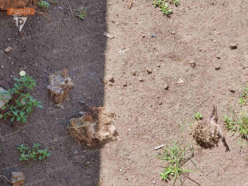 Жестокие игры: в Кривом Роге подростки подожгли гнездо птенцов