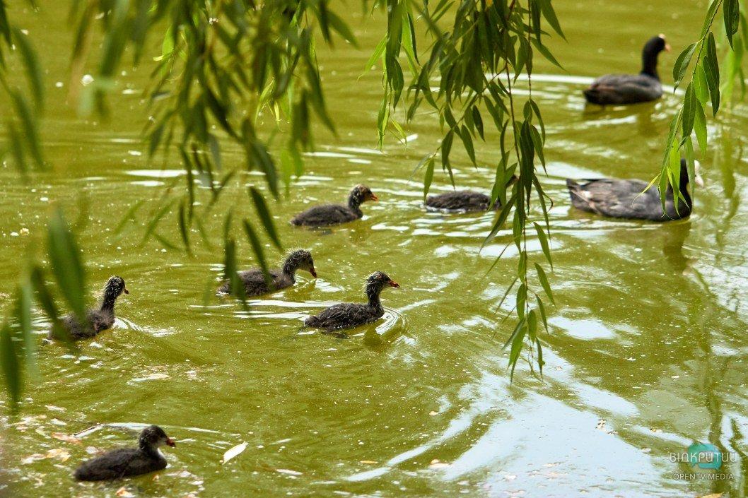 В Днепре в парке Глобы заметили необычных птенцов