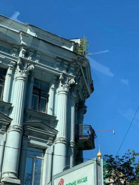 В Днепре на фасаде здания выросло дерево