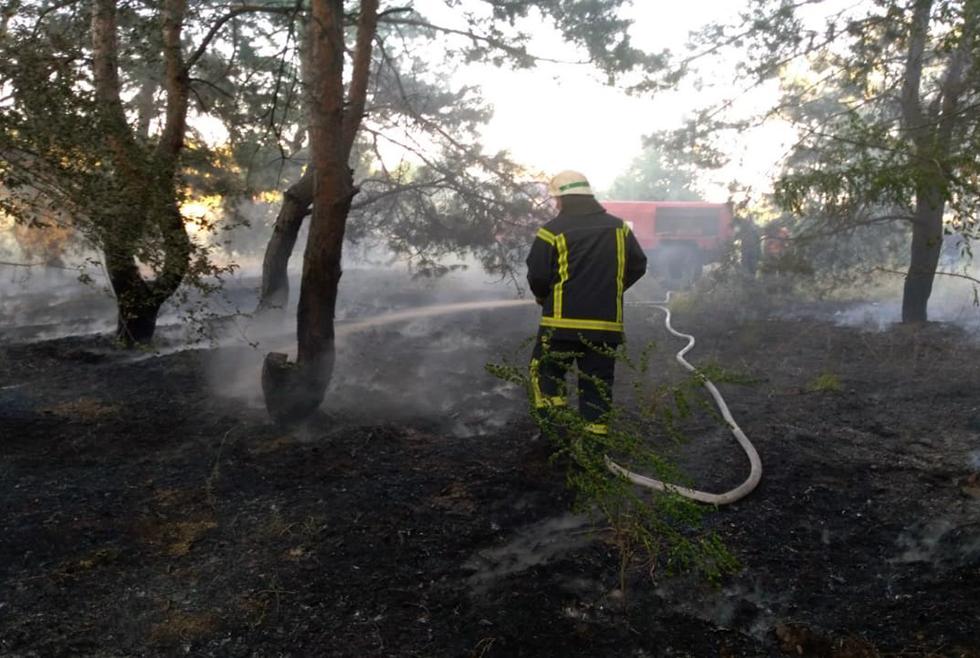 Пожар в лесу: возле Петриковки загорелась сухая трава