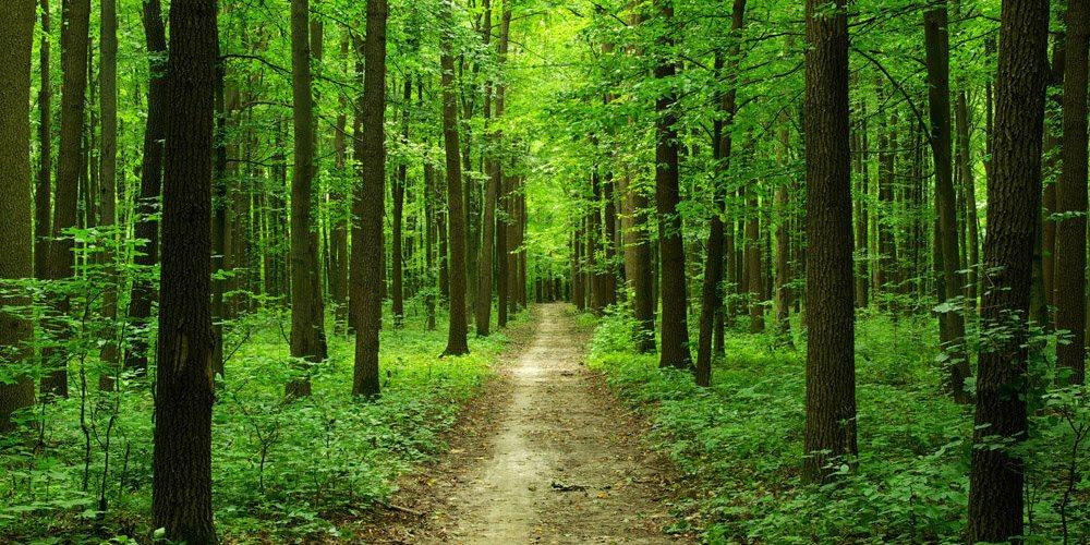 В Днепропетровской области запретили посещать леса