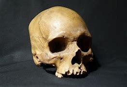В Днепре в Севастопольском парке нашли склеп с двумя скелетами