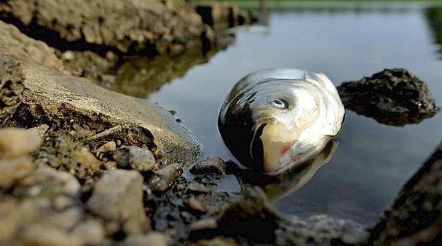 Мор рыбы возле Марганца