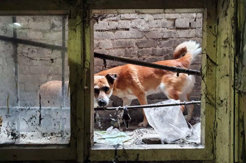 В Днепре спасли собак, застрявших в подвале