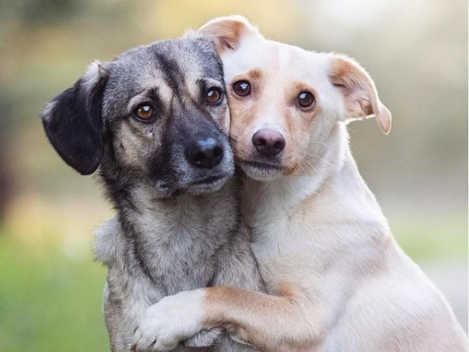 Оказались в ловушке: в Днепре спасли двух собак (ФОТО, ВИДЕО)