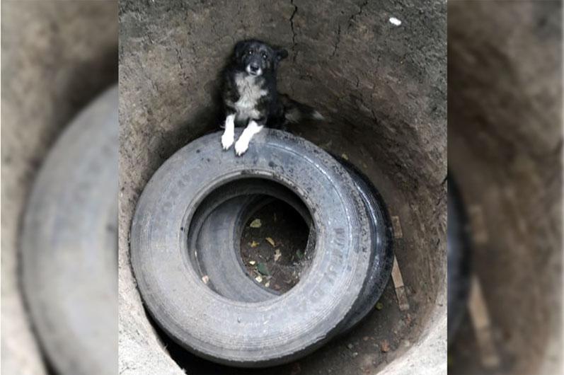 Застряла в яме: на Днепроптеровщине вызволили собаку из ловушки (ФОТО)