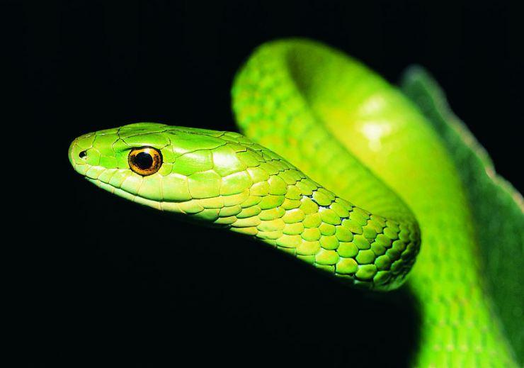 Нежданная гостья: в Днепре в одном из дворов поймали 1,5-метровую змею (ФОТО)
