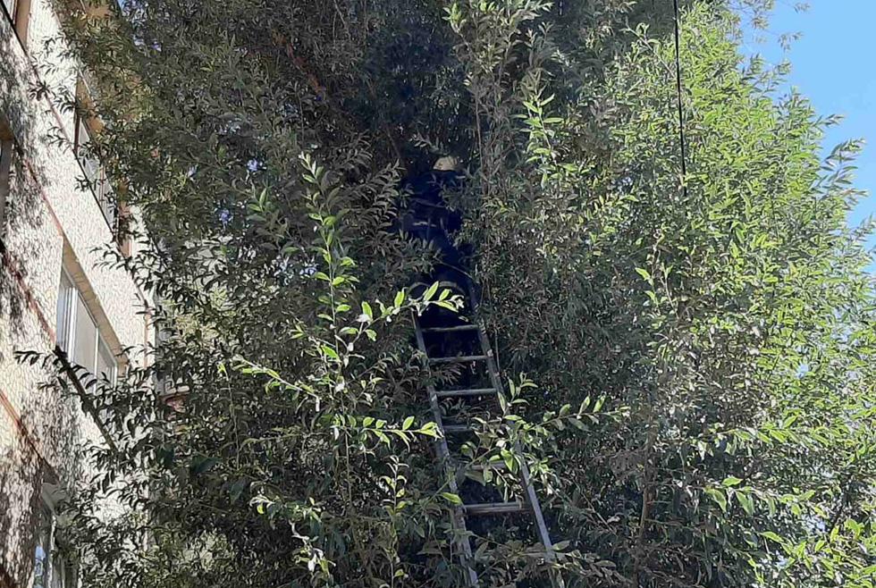 В Зеленодольске спасли котика, застрявшего на дереве