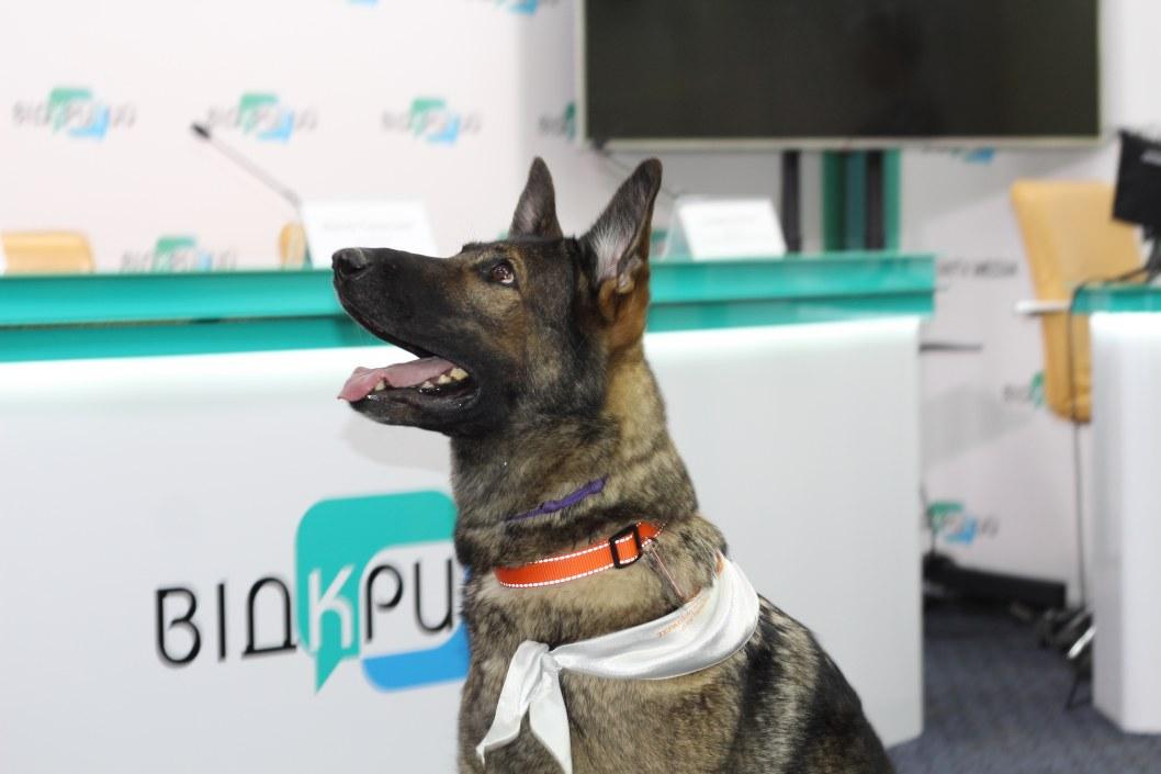 У Дніпрі працює собака-терапевт