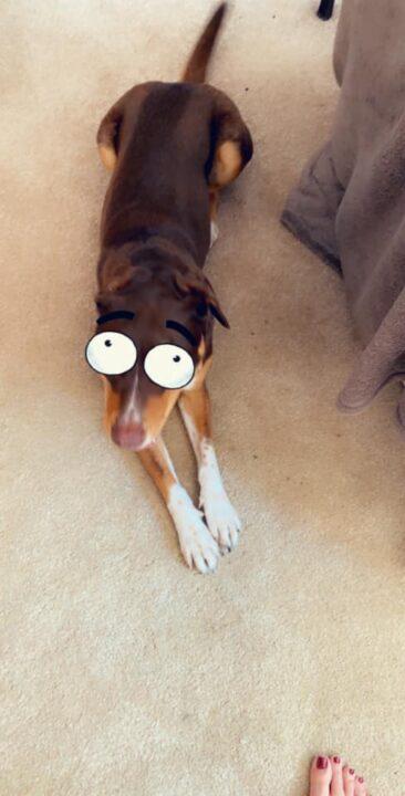 Мультяшные маски для собак в Snapchat