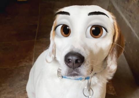 В сети появилась маска, превращающая собак в персонажей Disney