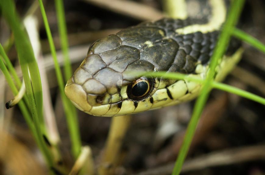 Незванная гостья: в центре Днепра ползала метровая змея (ФОТО)