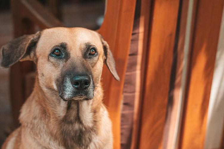 На Рабочей из 3-метрового люка спасли собаку