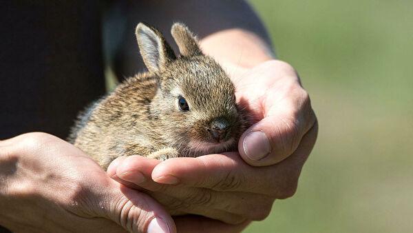 В Павлограде на пожаре спасли зайчонка
