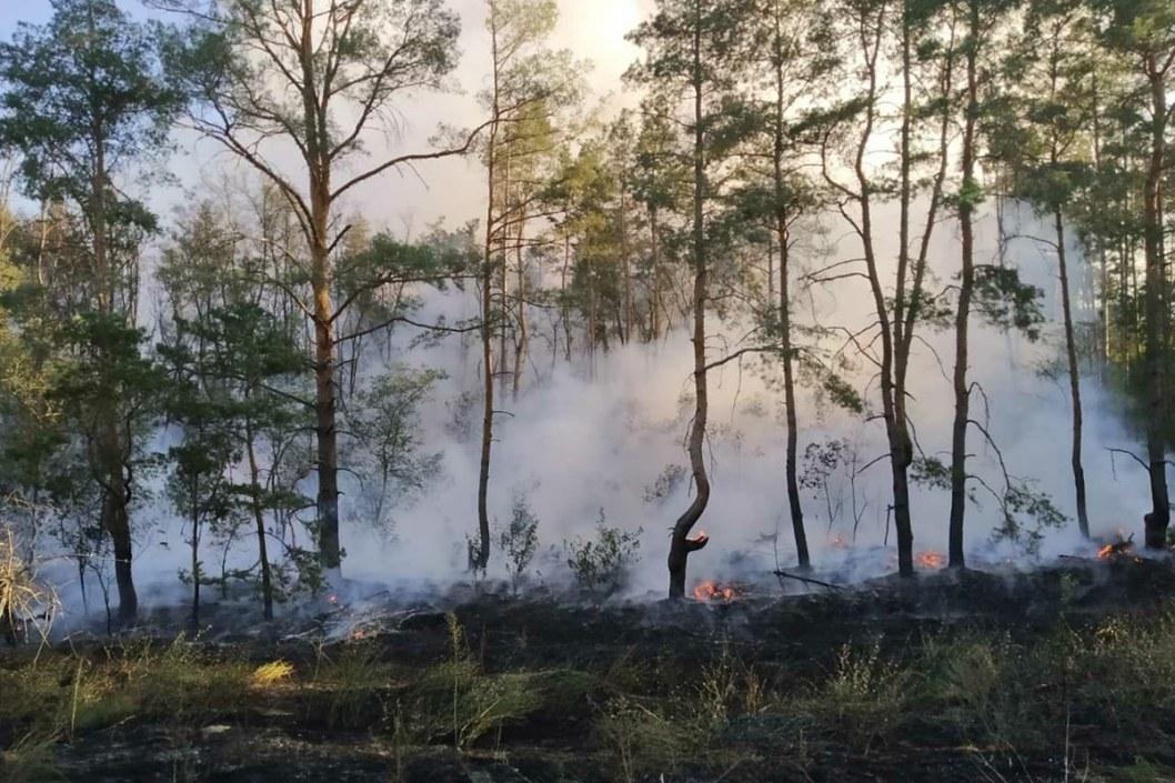 Под Днепром 4 часа тушили пылающий лес