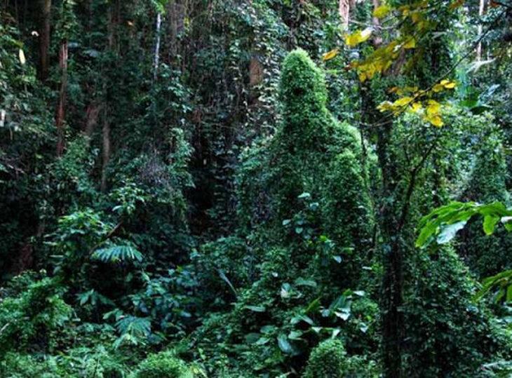 Тропические джунгли и памятник кенгуру: ТОП-9 мест в Днепре, где ты еще не был