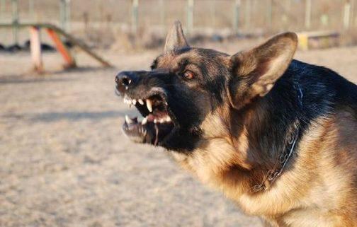 Собаки покусали двухлетнего мальчика: против родителей открыли уголовное производство