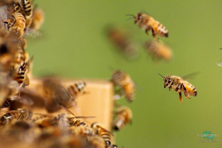 Опасное соседство: в Днепре возле детского сада поселился рой пчел
