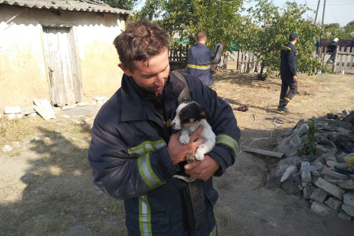 В Павлограде из глубокого колодца вытащили крохотного щенка