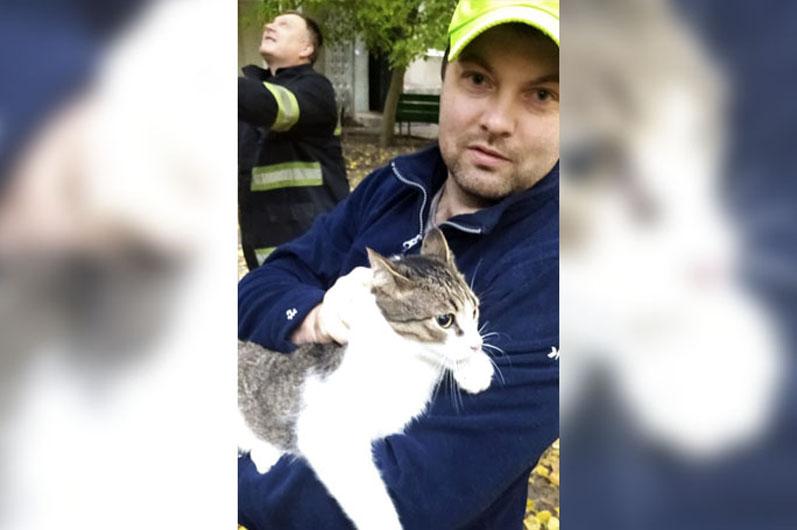 В Желтых Водах котик застрял на высоком дереве: помогли спасатели