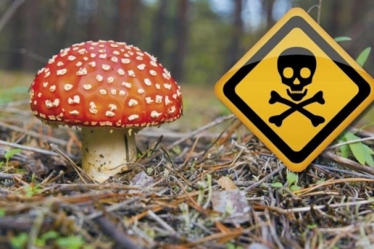 В Кривом Роге мать с дочерью умерли, отравившись дикорастущими грибами