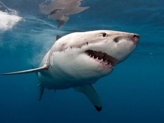 В Египте акула напала на семью украинцев и откусила руку ребенку
