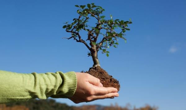 Озеленение города: в Днепре высадят рекордное количество деревьев