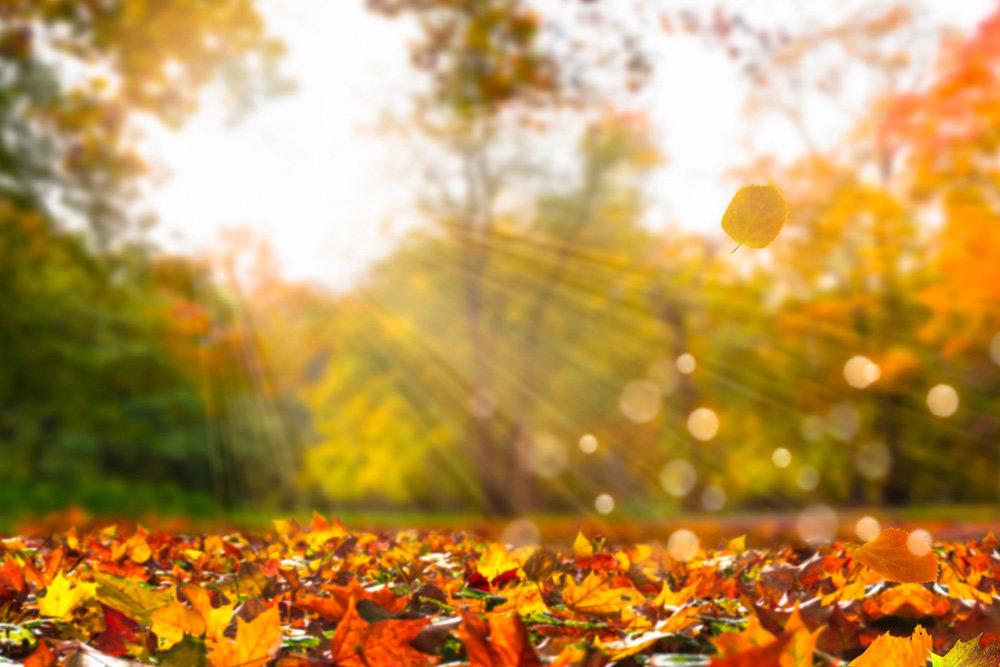 Какая погода будет в Днепре и области 1 ноября
