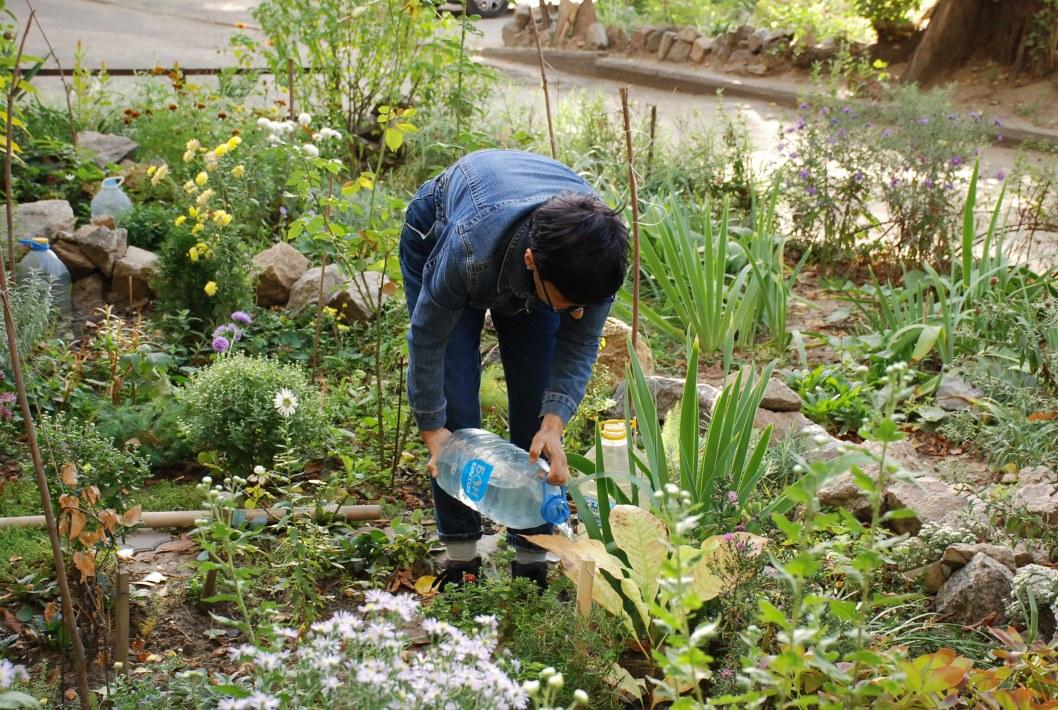 В Днепре почти в каждом дворе высадят новые деревья и кустарники (ФОТО)